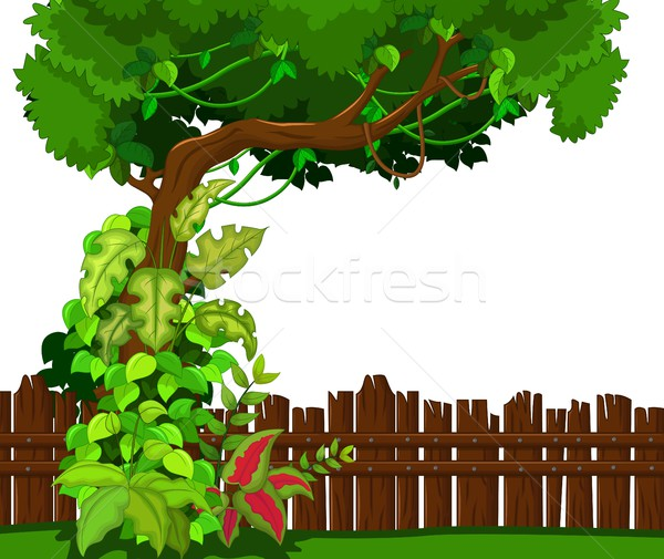 Wooden fence and tropical tree Stock photo © jawa123