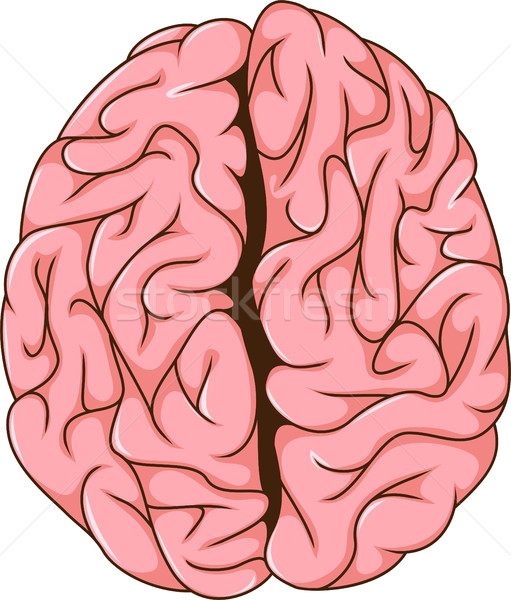 human left and right brain cartoon Stock photo © jawa123