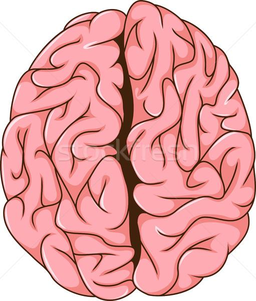Insan doğru beyin karikatür sağlık tıp Stok fotoğraf © jawa123