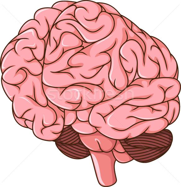 human brain clots cartoon Stock photo © jawa123