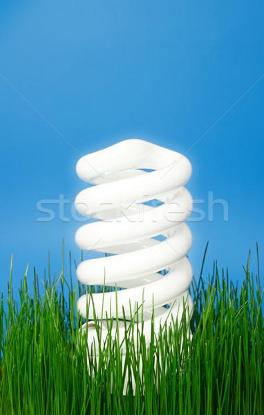 Lumineuses eco ampoule au-dessus herbe verte Photo stock © jaycriss