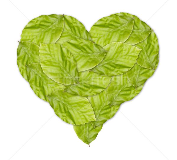 здорового зеленый сердце зеленые листья весны дизайна Сток-фото © jaycriss