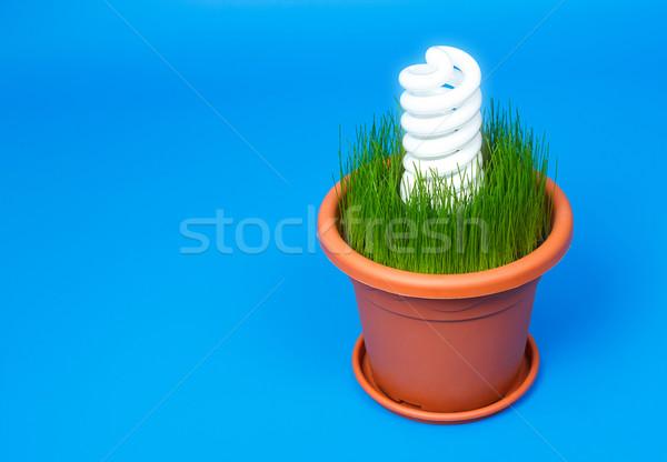 Alb eco spirală bec lumina ghiveci de flori Imagine de stoc © jaycriss