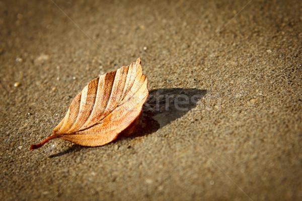 クローズアップ オレンジ 葉 捨てられた 具体的な 道路 ストックフォト © jaycriss