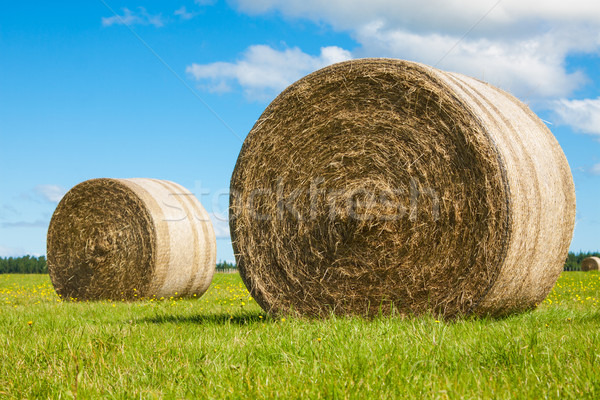 Two big hay bale rolls in a green field Stock photo © jaykayl