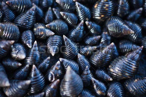 Morza powłoki tekstury żyć muszle Zdjęcia stock © jaykayl