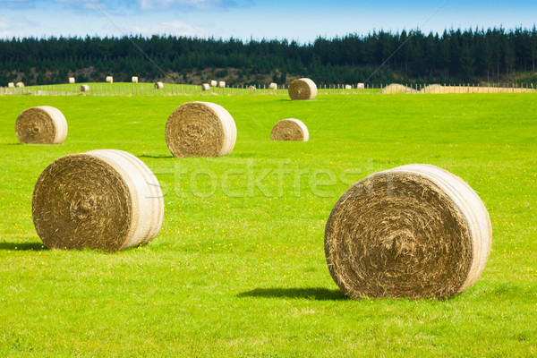 Feno fardo verde campo verão Foto stock © jaykayl