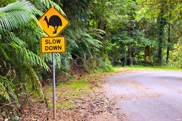 Estrada floresta norte queensland Austrália Foto stock © jaykayl