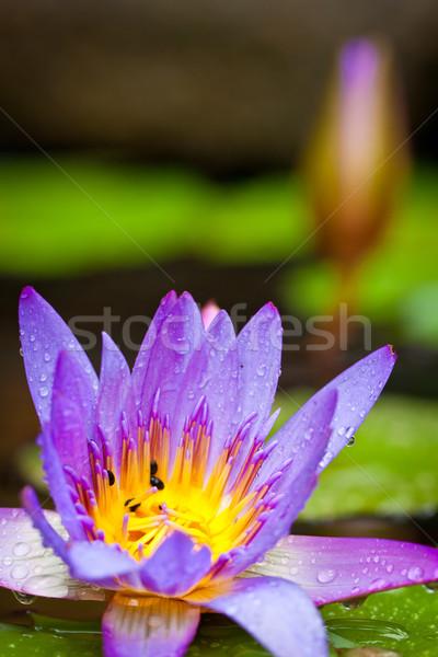 Mooie vijver shot lotus Stockfoto © jaykayl