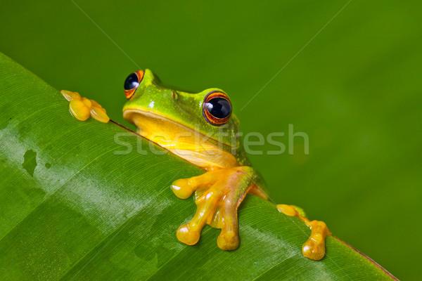 Cute красочный лягушка лист оранжевый Сток-фото © jaykayl