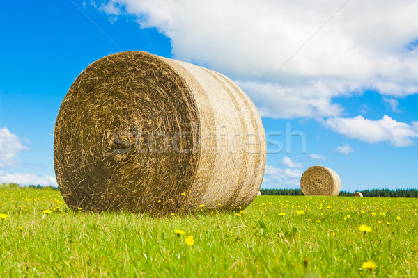 Big hay bale rollin a lush field Stock photo © jaykayl