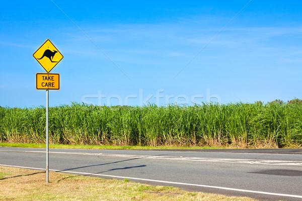カンガルー 道路 オーストラリア人 サイド 空 ストックフォト © jaykayl
