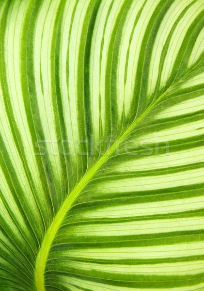 美しい 緑色の葉 春 森林 抽象的な ストックフォト © jaykayl