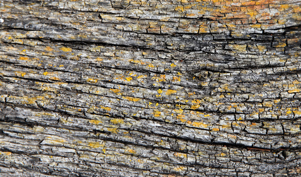 Bark Background Stock photo © jeayesy