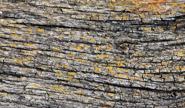 樹皮 クローズアップ 黄色 カラー テクスチャ 木材 ストックフォト © jeayesy
