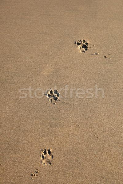 Foto stock: Cão · pegadas · areia · praia · textura · pé