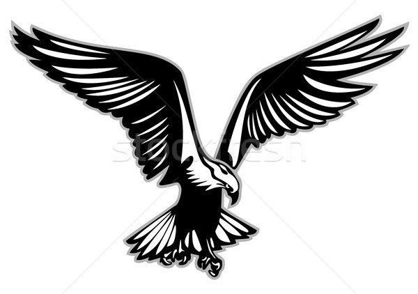 Bird of prey in flight vector illustration Stock photo © jeff_hobrath