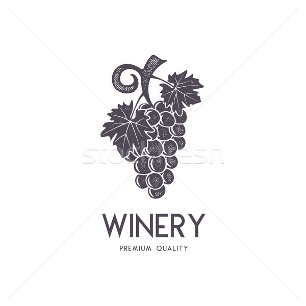 Vin Winery logo modèle boire Photo stock © JeksonGraphics