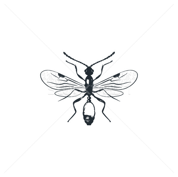 insect silhouette Stock photo © JeksonGraphics