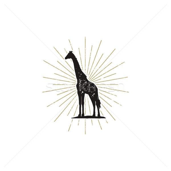 Hand drawn giraffe silhouette illustration. Vintage black giraffe with sunbursts isolated on white b Stock photo © JeksonGraphics