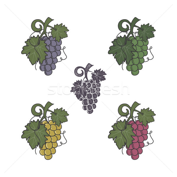 Set of grapes icon. Different colors and style. Flat, retro letterpress effect. Friut symbol for log Stock photo © JeksonGraphics