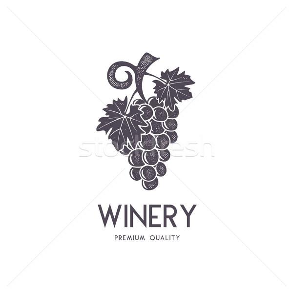 Vinho vinícola logotipo modelo beber Foto stock © JeksonGraphics