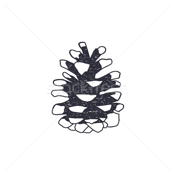 Vintage hand drawn conifer cone shape. Retro monochrome icon. Can be used for t shirts, prints, logo Stock photo © JeksonGraphics