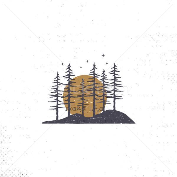 Foto stock: Floresta · sol · pinho · árvores
