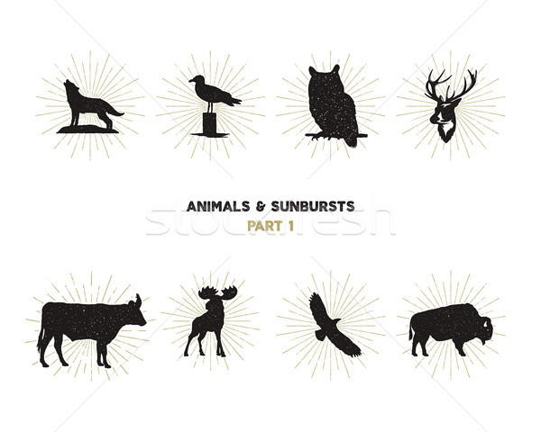 Set of wild animal figures and shapes with sunbursts isolated on white background. Black silhouettes Stock photo © JeksonGraphics