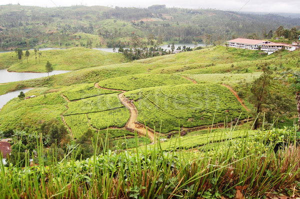 Tea-plantations and path in the Sri Lanka highlands Stock photo © jelen80