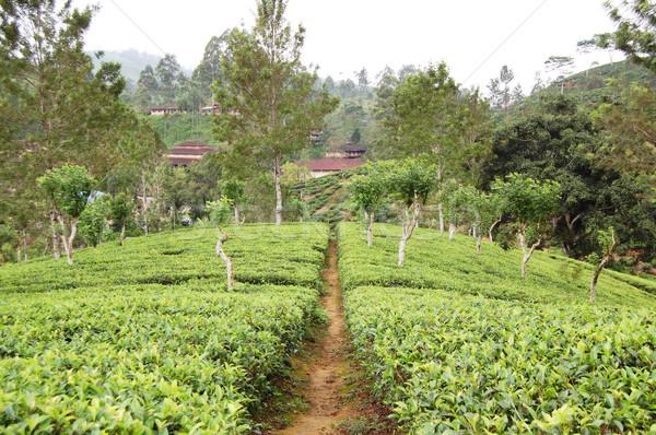 パス スリ·ランカ 高地 フィールド 茶 農業 ストックフォト © jelen80