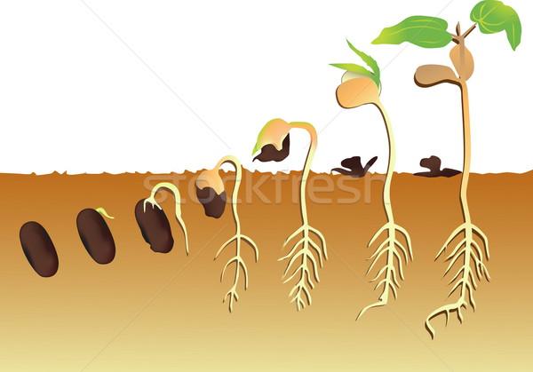 завода растущий саду зеленый сельского хозяйства рождения Сток-фото © jelen80