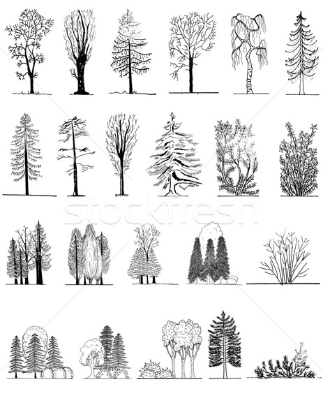 A set of tree silhouettes , for architectural or landscape design Stock photo © jelen80