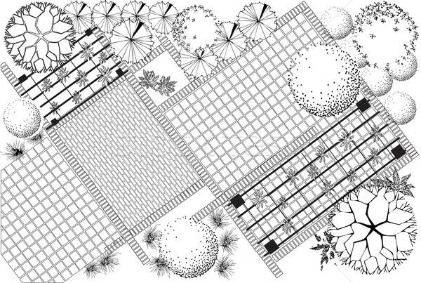 Garden plan black and white Stock photo © jelen80