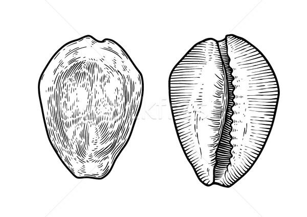 Foto d'archivio: Soldi · shell · illustrazione · disegno · inchiostro