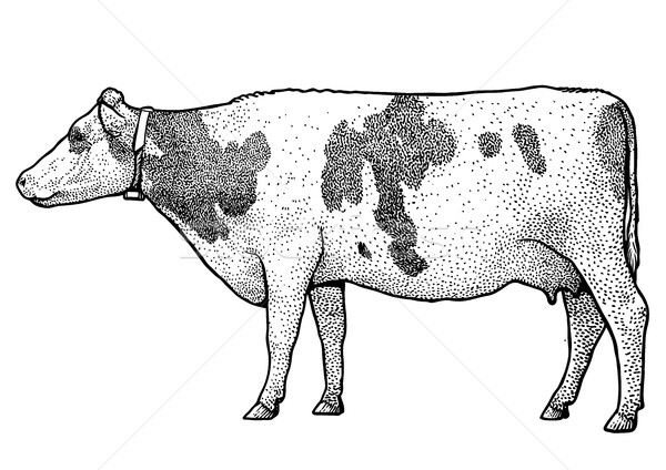 Cow illustration, drawing, engraving, ink, line art, vector Stock photo © JenesesImre
