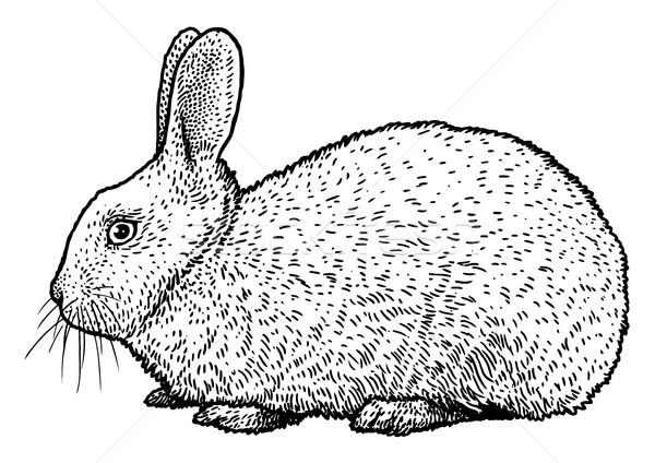 Rabbit illustration, drawing, engraving, ink, line art, vector Stock photo © JenesesImre