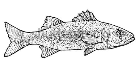 Carp bream fish illustration, drawing, engraving, line art, realistic Stock photo © JenesesImre