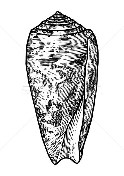 Kegel shell illustratie tekening inkt Stockfoto © JenesesImre