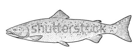 Karper vis illustratie tekening lijn Stockfoto © JenesesImre