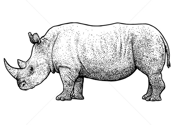Rhinoceros illustration, drawing, engraving, ink, line art, vector Stock photo © JenesesImre