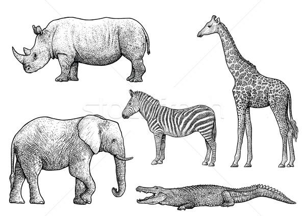 Stok fotoğraf: Afrika · hayvanlar · örnek · çizim · oyma · mürekkep