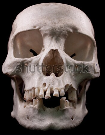 Humaine crâne osseuse tête morts dents Photo stock © jeremywhat