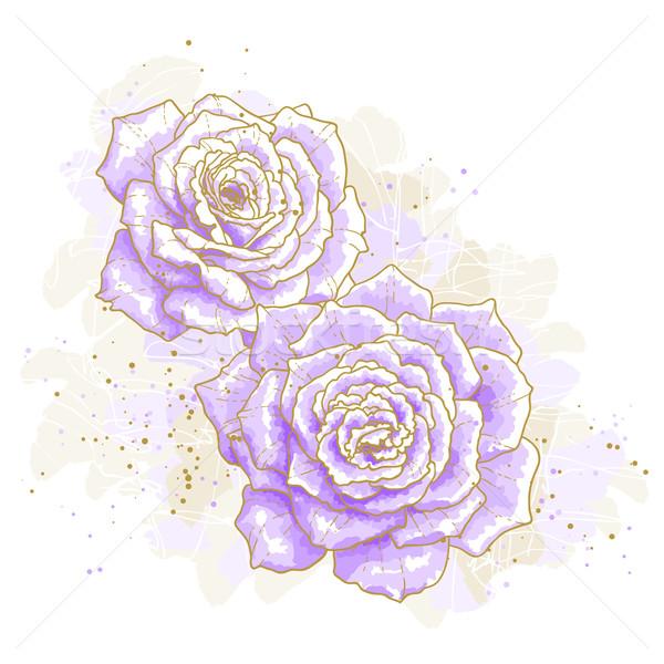 Ibolya rózsák fehér körvonal rajz vízfesték Stock fotó © jet