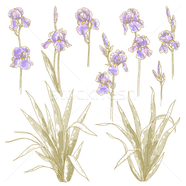 Collectie iris bloemen vector violet Stockfoto © jet