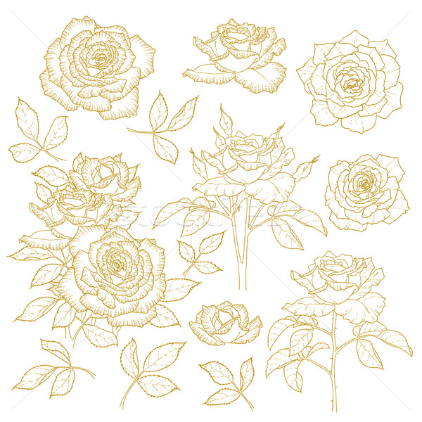 Set of one-colored outlined roses Stock photo © jet