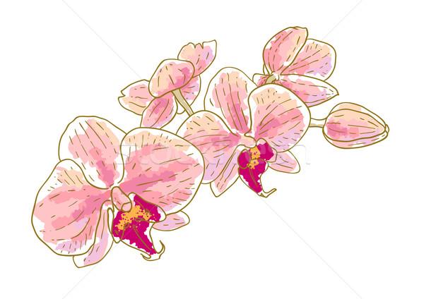 ág orchideák izolált fehér nyár retro Stock fotó © jet