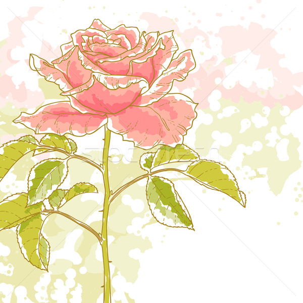 Pink rose on white background Stock photo © jet