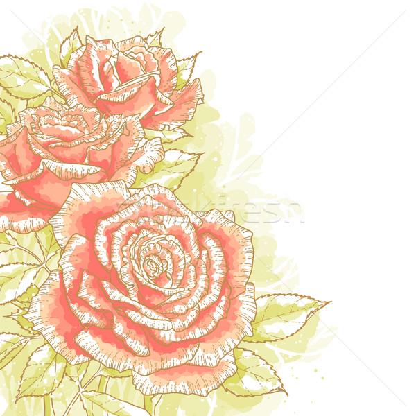 Rózsaszín rózsák fehér körvonal rajz levelek Stock fotó © jet