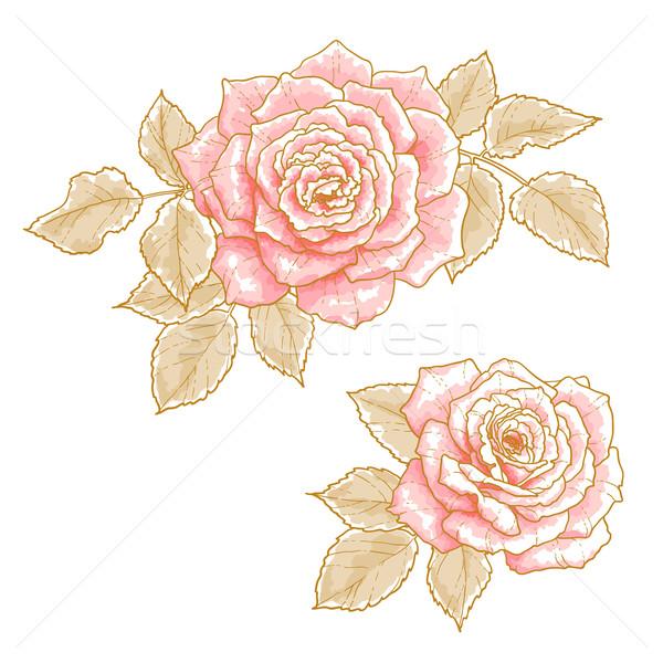 Rózsaszín rózsák kettő levelek izolált fehér Stock fotó © jet